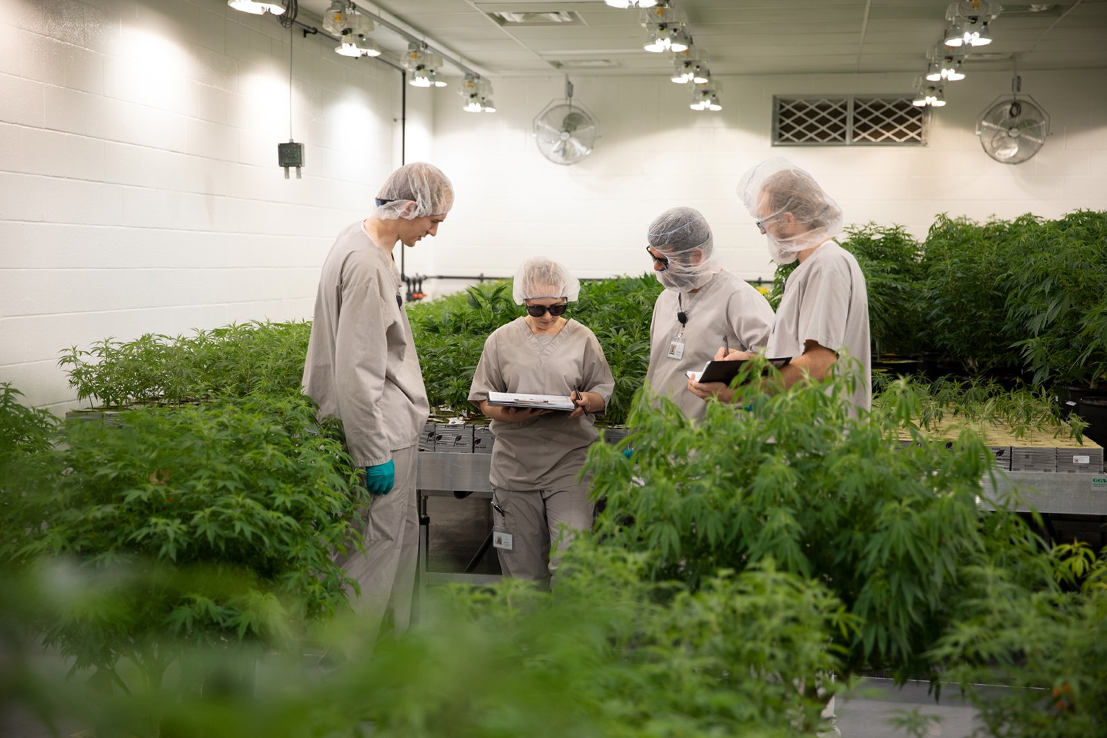 Group collaborating at growing facility - All images are from JC Green Inc featuring cannabis cultivated in Thorndale, Ontario using next-generation growing techniques and specializing in small-batch craft grown cannabis.