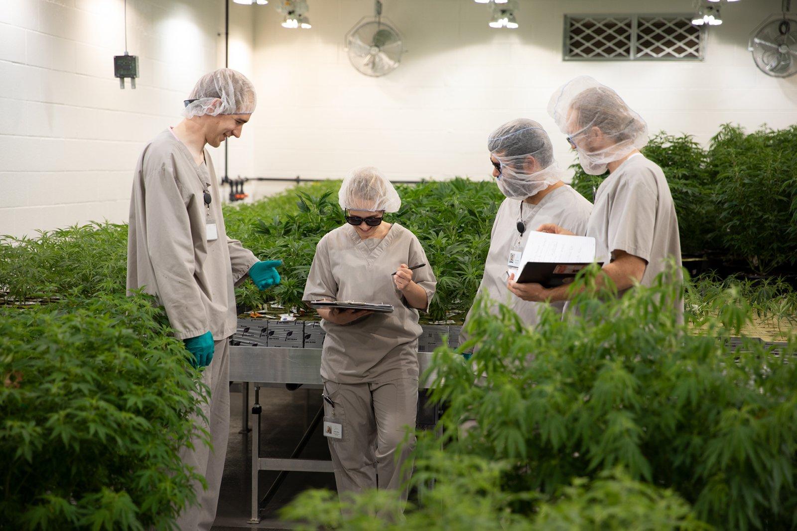 Group collaborating at growing facility